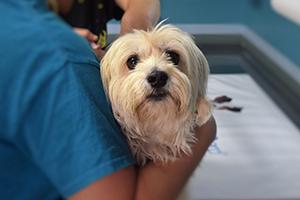 Szekszárdi állatorvosok elérhetősége